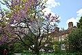 Chelsea Physic Garden 15052013 095.jpg