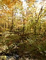 Chequamegon-Nicolet National Forest - Oct 6 2017.jpg