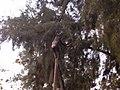 Chimpanzee and stick.jpg