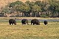 Chobe National Park, Hippos - panoramio - Frans-Banja Mulder.jpg
