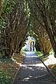 Church of St Mary the Virgin, Woodnesborough, Kent - churchyard path yew avenue 01.jpg