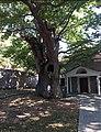 Church of assumption and eternal plane tree. Karyes, Laconia.jpg