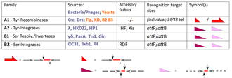 Site-specific recombinase technology - Tyr- and Ser-SSRs from prokaryotes (phages; grey) and eukaryotes (yeasts; brown); a comprehensive overview (including references) can be found in.