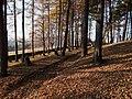 Cmentarz wojenny nr 368 z 1914 r. Limanowa-Jabłoniec - 1914 Military cemetery ^368 - panoramio (4).jpg