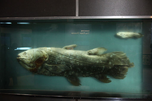 Coelacanth and pup - smithsonian