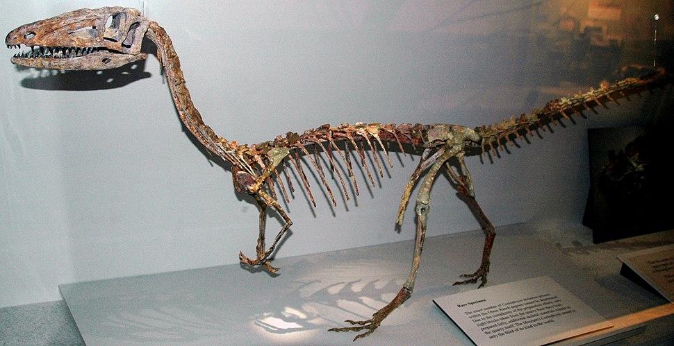 Coelophysis bauri mount