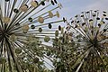 Collodi, Parco di Pinocchio, l'albero degli zecchini 02.jpg