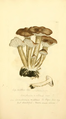 Coloured Figures of English Fungi or Mushrooms - t. 184.png