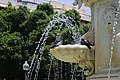 Columba livia in Santa Cruz de Tenerife.jpg