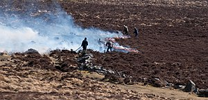 Ulex - Controlled burning of gorse in Devon, England