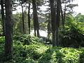 Copenhagen Botanical Garden - conifers.jpg
