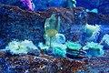 Corals - panoramio.jpg