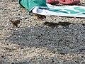 Corfu beach 36.JPG