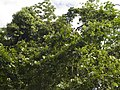 Costa Rica (6110124314).jpg