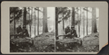 Couple posing on a log bench, from Robert N. Dennis collection of stereoscopic views.png