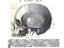 Cranio Wikiversità