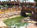 Crocoparc-Agadir-bassins-crocodiles-min.JPG