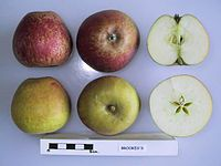 Cross section of Brookes's, National Fruit Collection (acc. 1948-039).jpg
