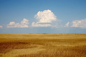 Prairie - Prairie, Badlands National Park, South Dakota, USA, is in the mixed grasslands region containing some species of tall grass and some of short grass
