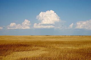Prairie ecosystems considered part of the temperate grasslands, savannas, and shrublands biome