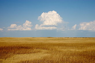 Prairie - Prairie, Badlands National Park, South Dakota, US, is in the mixed grasslands region containing some species of tall grass, and some of short grass
