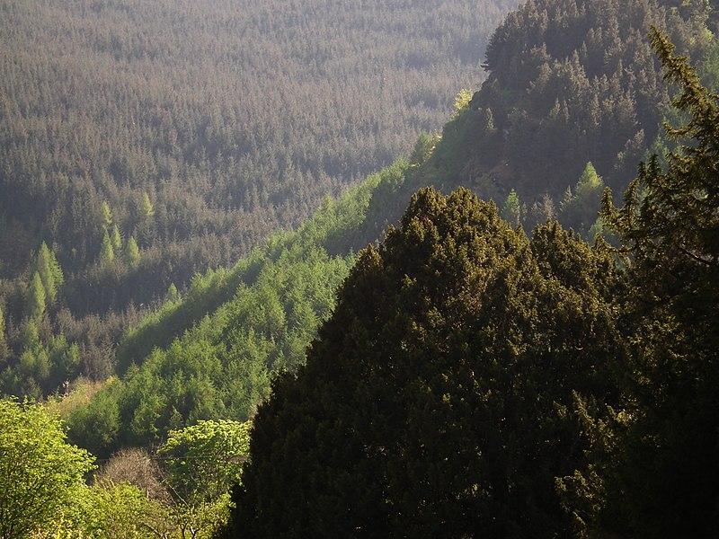 woodland, Cwm Pennant, Powys, Wales