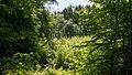 D08 Tiefental Königsbrück Naturschutzgebiet (18).jpg