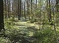 DSC0819 Міжрічинський регіональний ландшафтний парк.jpg