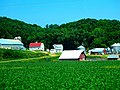 Dairy Farm in Platte River Valley - panoramio.jpg