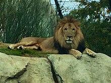 Dallas Zoo - Wikipedia