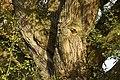 Das Baumgesicht - panoramio.jpg