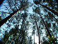 Day 3- Lopochova forest (45077382).jpg