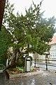De Caesarsboom te Lo-Reninge - 369370 - onroerenderfgoed.jpg