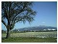 December Mount Kandel 1300 mtr Seasons - Magic Rhine Valley Photography 2012 - panoramio.jpg