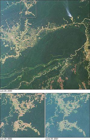 Deforestation in Brazil - A NASA satellite observation of deforestation near Rio Branco in Brazil observed July 2000.