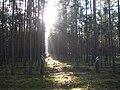 Der Weg zur Sonne ist markiert... - panoramio.jpg