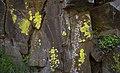 Deschutes Wild and Scenic River -- Beavertail (25519659083).jpg