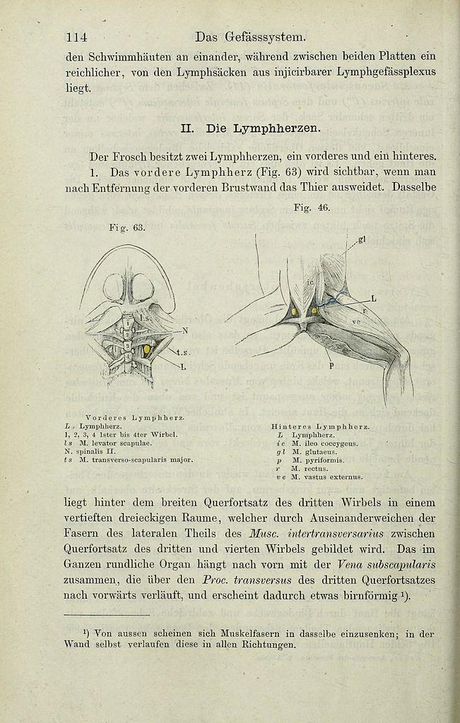 File:Die Anatomie des Frosches (Page 114) BHL33481731.jpg ...