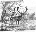 Die Gartenlaube (1858) b 601.jpg