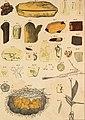 Die im Bernstein befindlichen organischen Reste der Vorwelt, gesammelt (1845) (20617537830).jpg