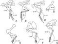 Dinosaur forelimb orientation.PNG
