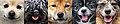 Dogs of WOOFSTOCK.jpg