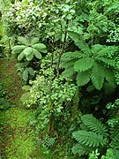 Dominica, Karibik - Passed by Cable Car to the Treetops - panoramio.jpg