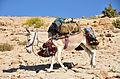 Donkey-Muqal.jpg
