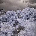 Down the Jemez River (4780175364).jpg