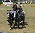 Dressage Driving at the World Equestrian Games 2010 (5118468214).jpg