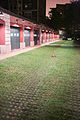 Driveway with grass and rabbit, Chicago September 2, 2013-5020.jpg