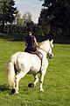 Duo de cavalières mondial du cheval percheron 2011Cl J Weber01 (24057394506).jpg