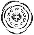 EB1911 Flower - diagram of Saxifraga tridactylites flower.jpg