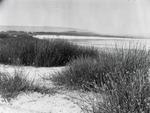 ETH-BIB-Ufer eines Sees-Kilimanjaroflug 1929-30-LBS MH02-07-0590.tif